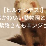 【ヒルナンデス!】原宿の動物園とは?キンプリ平野紫耀もエンジョイ!