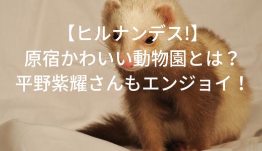 【ヒルナンデス!】原宿の動物園とは?キンプリ平野紫耀も訪問!