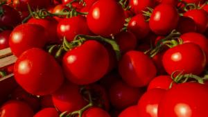 ミニ野菜ランキング3位「ミニトマト」血管、肌を老けさせない