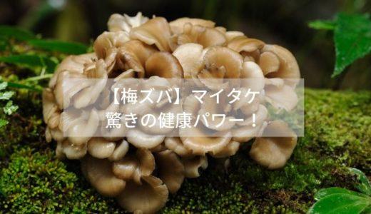 【梅ズバ】マイタケ 驚きの健康パワー!