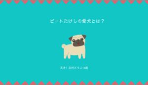 【志村どうぶつ園】ビートたけしの愛犬の犬種は?