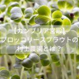 【カンブリア宮殿】-ブロッコリースプラウトの-村上農園とは?
