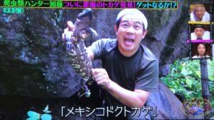メキシコドクトカゲの画像2