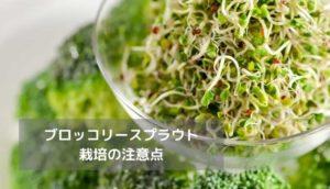 ブロッコリースプラウト栽培の注意点