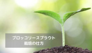 栽培の仕方