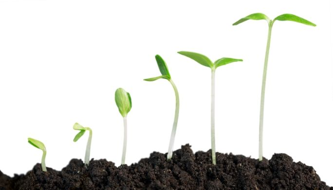 豆苗の栽培方法