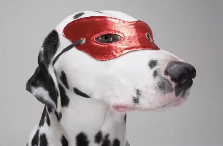 写真で一言「仮面をつけた犬」