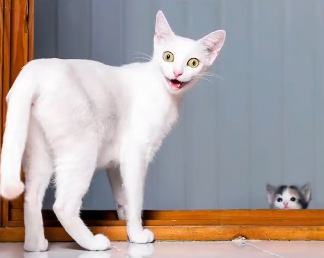 写真で一言「振り返る猫」