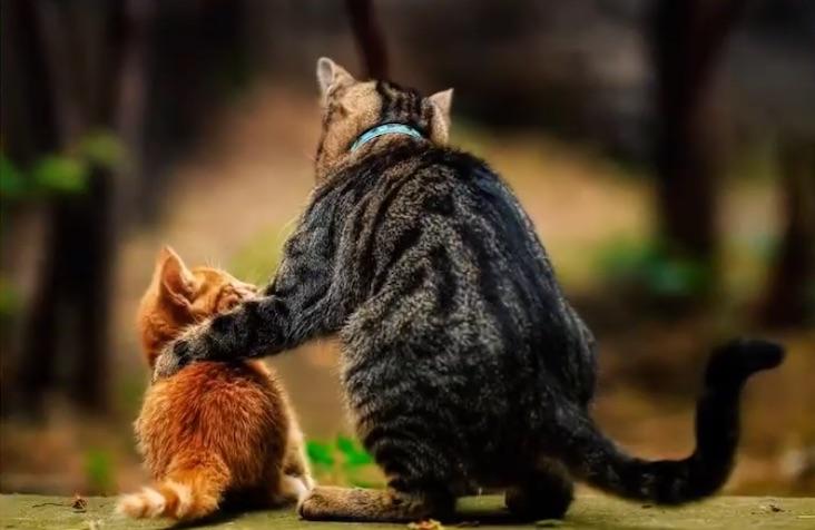 写真で一言「猫2匹」