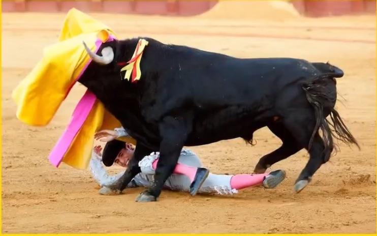 写真で一言「闘牛」